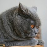 26-02-17-fluffy-grey-cat14334