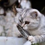 26-02-17-funny-cats-wallpaper13563