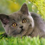 26-02-17-grey-cat-images11174
