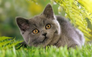 26-02-17-grey-cat-images11174