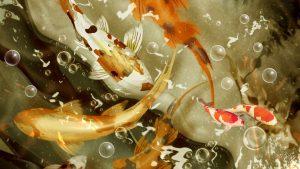 26-02-17-koi-fish-pictures14638