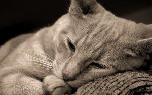 26-02-17-lying-cat-hd10250