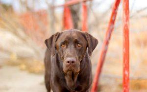 26-02-17-photo-dog-close-up15027