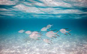 26-02-17-silver-fish16711