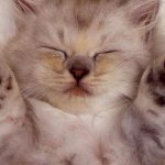 26-02-17-sleep-cat-wallpaper18579