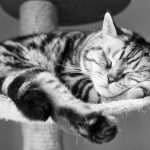 26-02-17-sleeping-cat-wallpaper-751515765