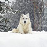 26-02-17-white-dog18455