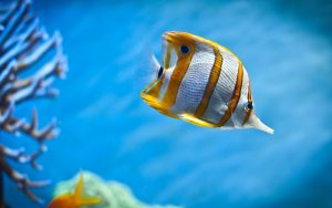27-02-17-aquarium-fish-background17874
