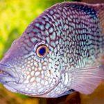 27-02-17-aquarium-fish-hd10685