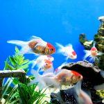 27-02-17-aquarium-fish16696
