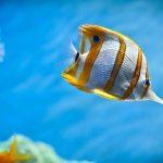 27-02-17-aquarium-fish17543