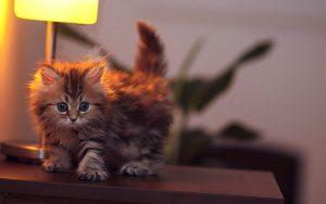 27-02-17-baby-cat-wallpaper8047