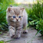 27-02-17-baby-cat7868