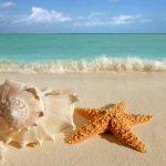 27-02-17-beach-starfish13081