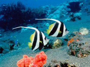 27-02-17-beautiful-fish-wallpaper4732