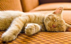 27-02-17-beautiful-sleeping-cat-wallpaper4793