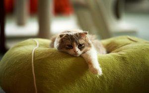 27-02-17-bed-cat-rest15992