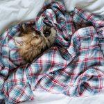 27-02-17-bed-shirt-kitten-cat11401