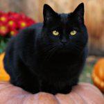 27-02-17-black-cat13242