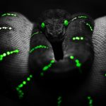 27-02-17-black-snake-background-wallpaper10405