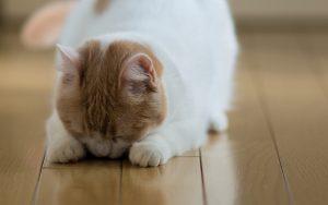 27-02-17-cat-animal-floor11653