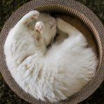 27-02-17-cat-basket-sleep14872
