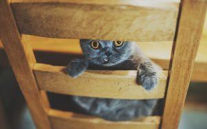 27-02-17-cat-chair-look11574