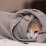 27-02-17-cat-clothes-hidden-photo16690