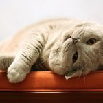27-02-17-cat-cuddle-ready12230
