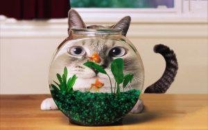 27-02-17-cat-goldfish-aquarium15092