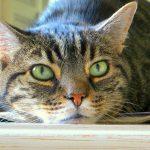27-02-17-cat-green-eyes-hd11750