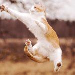 27-02-17-cat-jump-catch16037