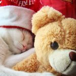 27-02-17-cat-sleeping-with-teddy-bear11270