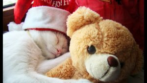 27-02-17-cat-sleeping-with-teddy-bear11270