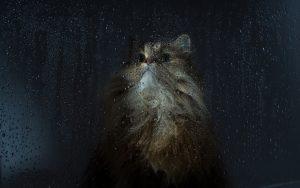 27-02-17-cat-wet-window10522