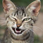 27-02-17-cat-wink17823