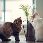 27-02-17-cats-kittens-vase-flowers-photo11491