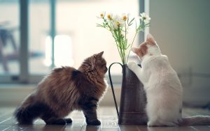 27-02-17-cats-kittens-vase-flowers-photo11491
