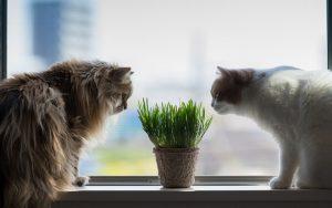 27-02-17-cats-window10814