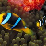 27-02-17-clown-fish-picture12821