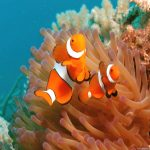 27-02-17-clown-fish-picture17999