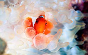 27-02-17-clownfish-114882