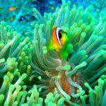 27-02-17-clownfish-and-anemone11721