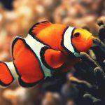 27-02-17-clownfish-underwater17934
