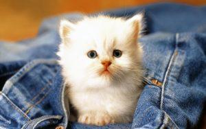 27-02-17-cute-cat-pose11564