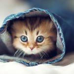 27-02-17-cute-cats5137