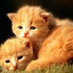 27-02-17-cute-little-cats15541