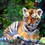 27-02-17-cute-little-tiger15878