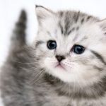 27-02-17-cute-mew-mew-cat17748