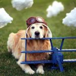 27-02-17-dog-airplane-helmet10960